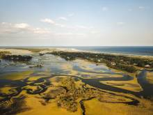 Kiawah Island marsh